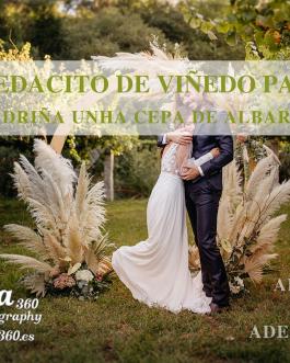 🌿Amadrina una cepa💚 Regala un pedacito de viñedo en las Rías Baixas🥂🍾🍇 Caja de 6 botellas de vino PEÓN&REI+Fiesta Vendimia